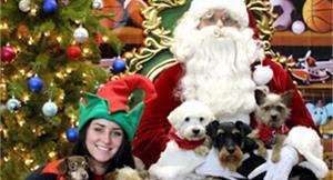 感人!垃圾堆棄犬 加拿大歡度耶誕