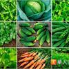 胃癌術後少負擔 健康飲食8原則