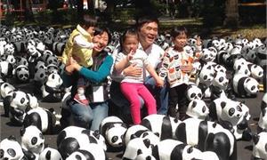 貓熊出沒!1600隻紙貓熊行銷台北