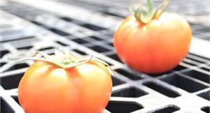 名醫甩肉十公斤 豆漿番茄增飽足感