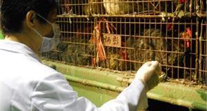 黃立民:鞏固人禽防線 避免大災難
