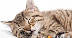 寵物治病不怕痛 雷射針灸新選擇