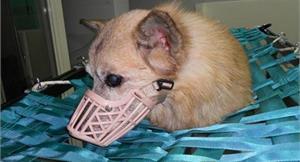 一線生機!中醫針灸治療癱瘓狗成風潮