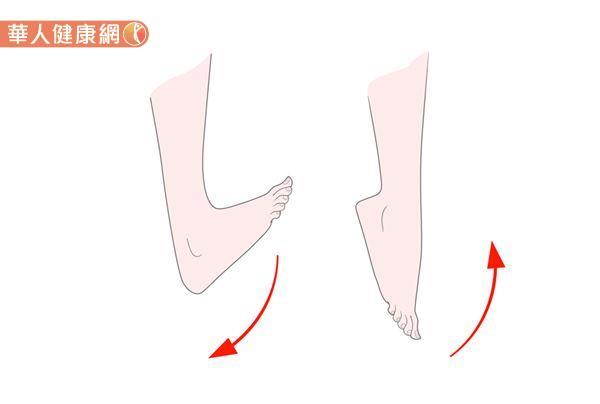 腳踝上翹動作,能伸展阿基里斯腱,進一步牽引小腿肌肉。