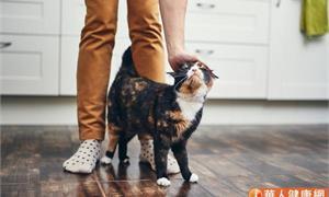 愛貓人士必知!從貓咪尾巴看出主子心情、健康端倪