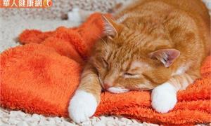 家有老貓?貓奴看過來,獸醫師帶你認識貓咪用藥基本知識