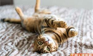 貓最怕腎不好!為什麼貓咪都不喝你準備的水?問題出在這