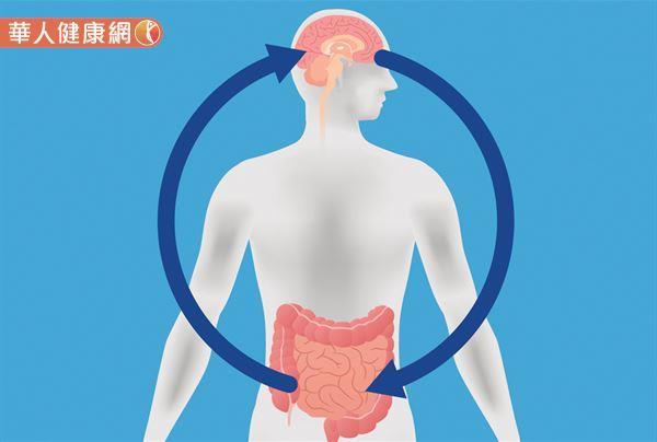 人體有90%血清素與50%多巴胺,不是從大腦製造出來,而是由腸道製造出來再送到大腦!