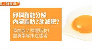 卵磷脂能分解內臟脂肪?助減肥?降血脂≠降體脂肪!營養學專家這樣說