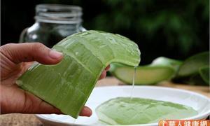 食藥署:111年1月1日起,使用蘆薈葉當原料的食品,需標示孕婦等5類人不建議食用字樣