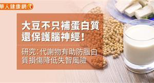 大豆不只補蛋白質 還保護腦神經!研究:代謝物有助防腦白質損傷降低失智風險