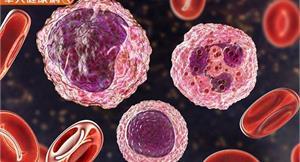 免疫系統如何運作?5種不同抗體有何區別?圖解過敏反應、免疫機制一次看懂